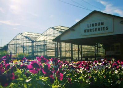 Lindum Nurseries